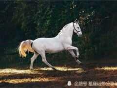 生肖馬和生肖馬好不好 馬和馬屬相婚配合不合