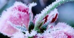 心理測試:哪束雪中花最驚豔,測出你身邊會出現貴人還是小人