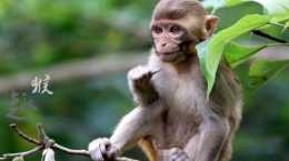 同年不同命,屬猴的人在以下幾個月出生,一生福祿雙至,財富不愁