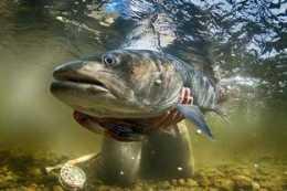 釣到這些魚不放有坐牢風險,每年都有人遭,附最新名錄