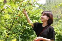 又到採摘季,兒時當零食吃,一摘十幾斤,如今30元一斤成稀罕水果