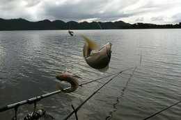 釣魚也能觸犯刑律,釣友們要小心這些魚類