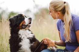 如何訓練你的狗搖爪子?