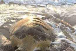 小夥散步在沙灘上,發現驚人巨物,走近一看滿臉羞紅!