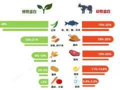 吃植物蛋白好,還是動物蛋白好?