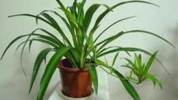 家中萬萬要種這5種植物, 招財走好運還旺宅, 難怪身體越住越健康