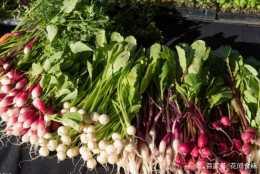 這些蔬菜,到底該吃葉子還是吃根?這麼多年居然不知道