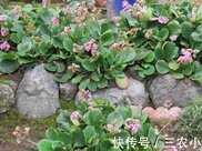 農村一種不起眼的野花,沒有人注意過,在城裡一斤幾十元