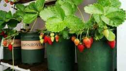陽臺種蔬菜,種水果,避免一無所獲,給你提個醒,有些不能種