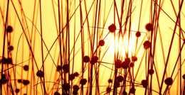 週四 農曆六月十三 今日大暑,哪些屬相要多需謹慎?如何調整?