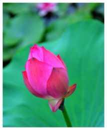 10月下旬,4屬相吉星當頭,桃花朵朵,橫財大發,開啟幸福生活