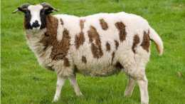 生肖羊: 財運會一發不可收, 後半輩子富貴榮華, 富甲一方