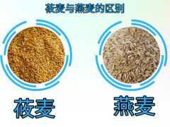 莜麥與燕麥質量標準的區別,產品加工應用,水分含量及影響