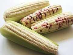 糯玉米水分含量測定影響:安全儲藏、保鮮、加工生產