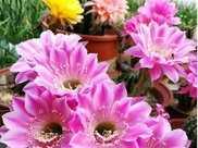 家裡養這幾款植物,好養易活不招蟲,養在哪裡都爆盆,好運到來