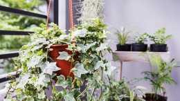 臥室養花選這5個品種,能淨化空氣,怡人的花香還有助於改善睡眠