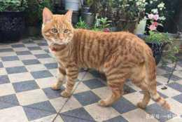 寵物故事:像流浪貓一樣做這個世界的旁觀者